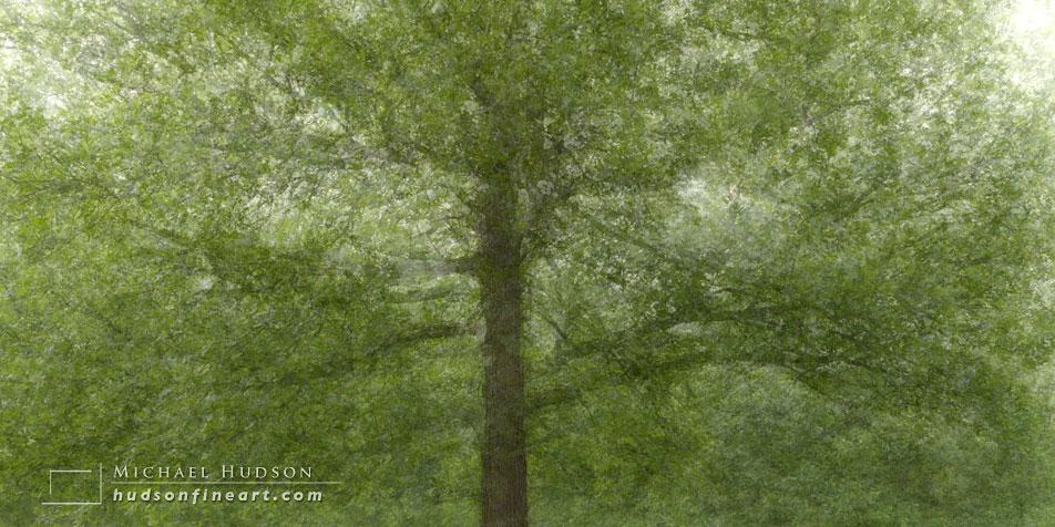 arby-tree-jul2015-3.jpg