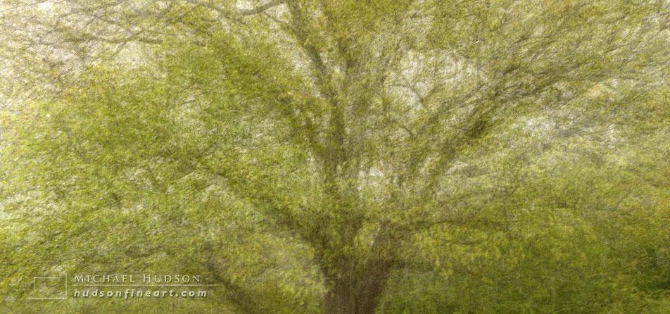 arby-tree-oct2015-2a.jpg