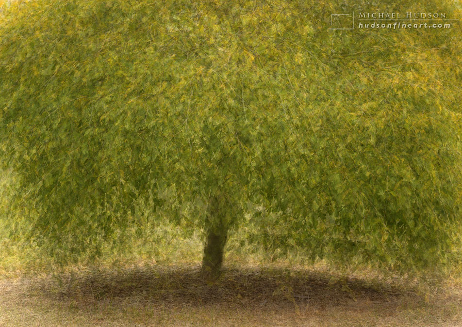 arby-tree-oct2015-15.jpg