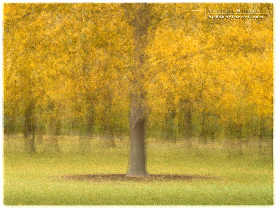arby-tree-oct2015-17.jpg