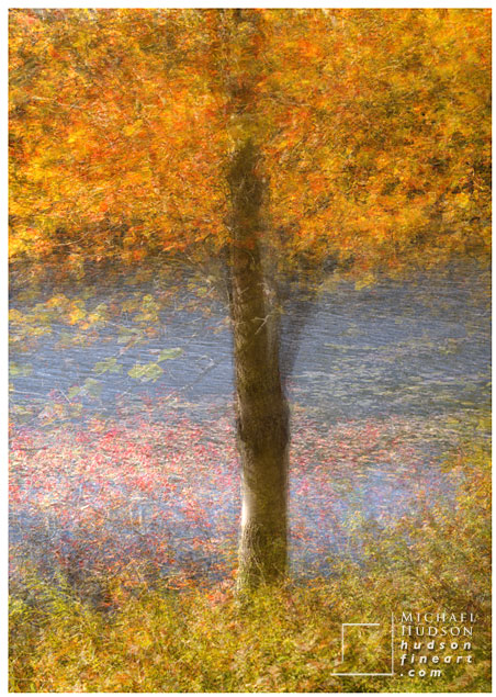acadia-tree-collage-14.jpg