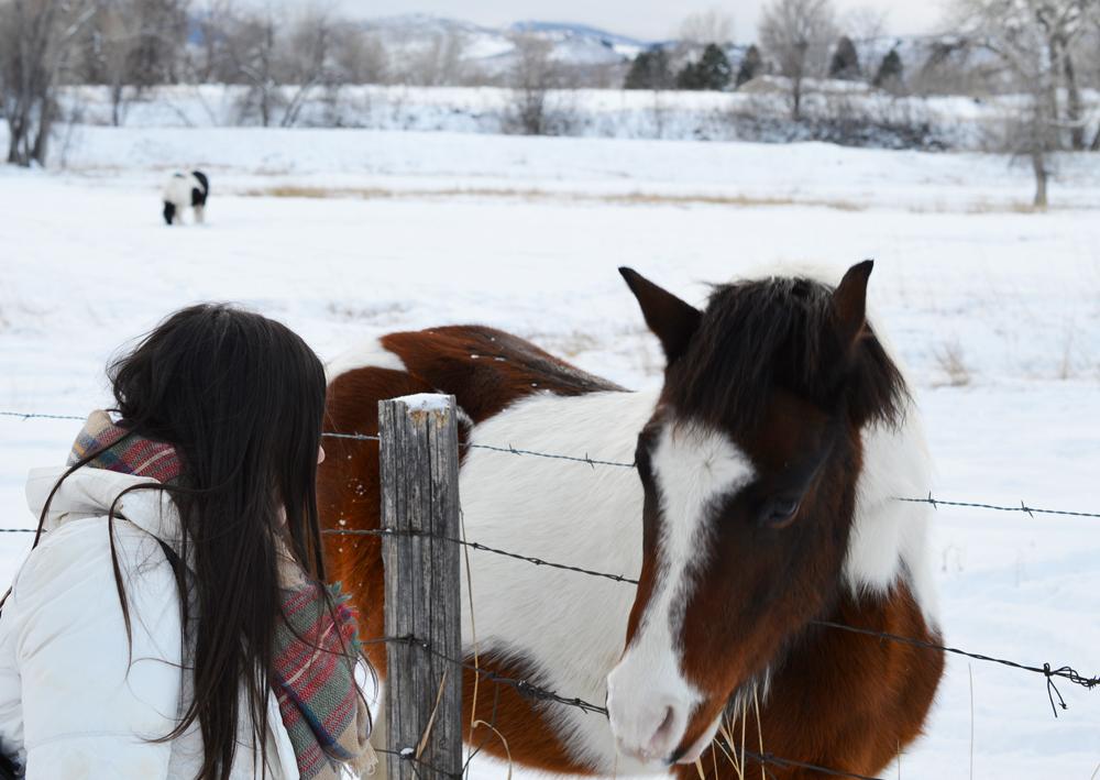 Denver Horses 2