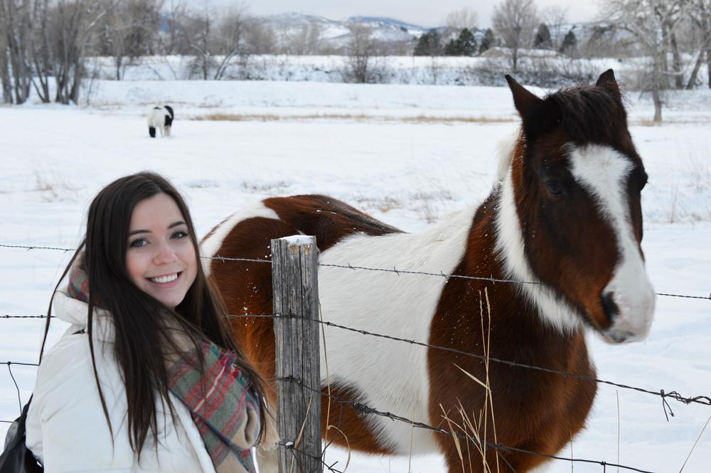 Denver Horses 3