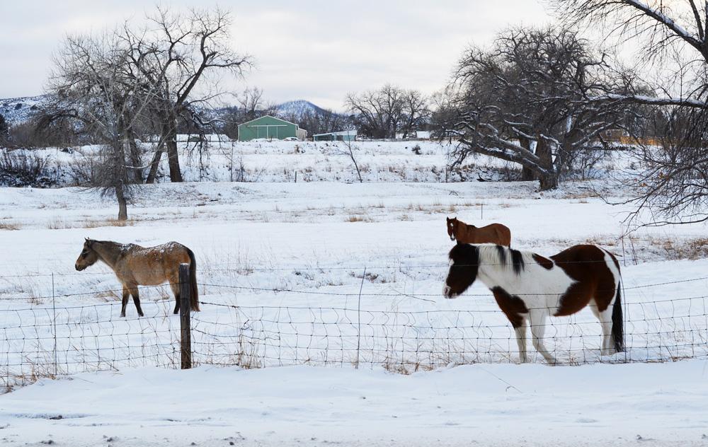 Denver Horses