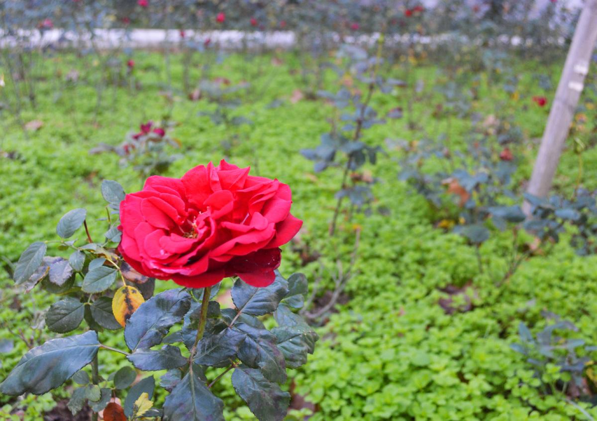Flower Istanbul
