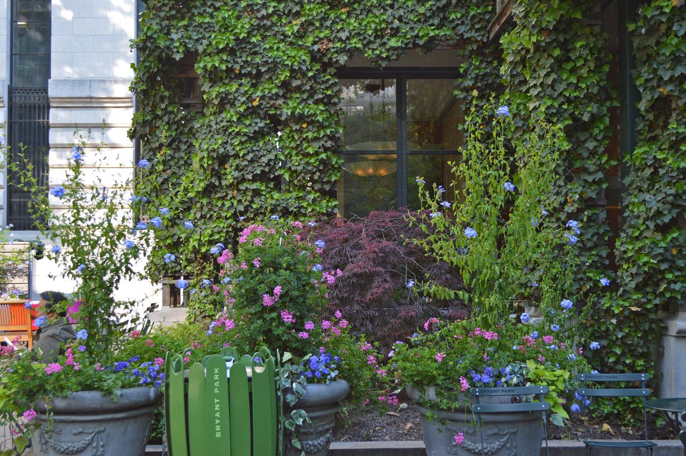 Bryant Park Flowers Ivy
