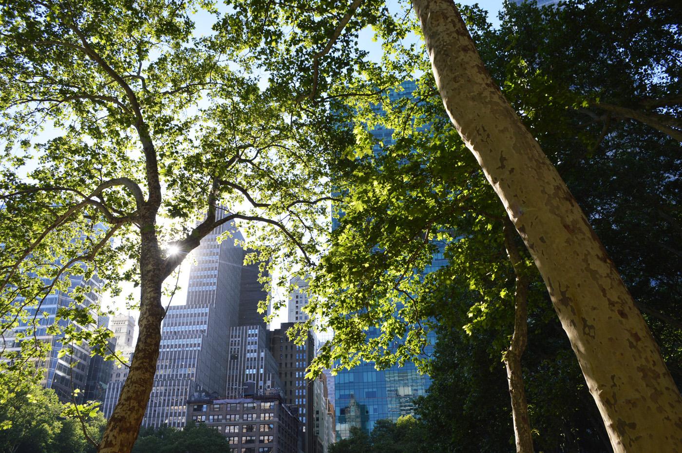 Bryant Park Trees