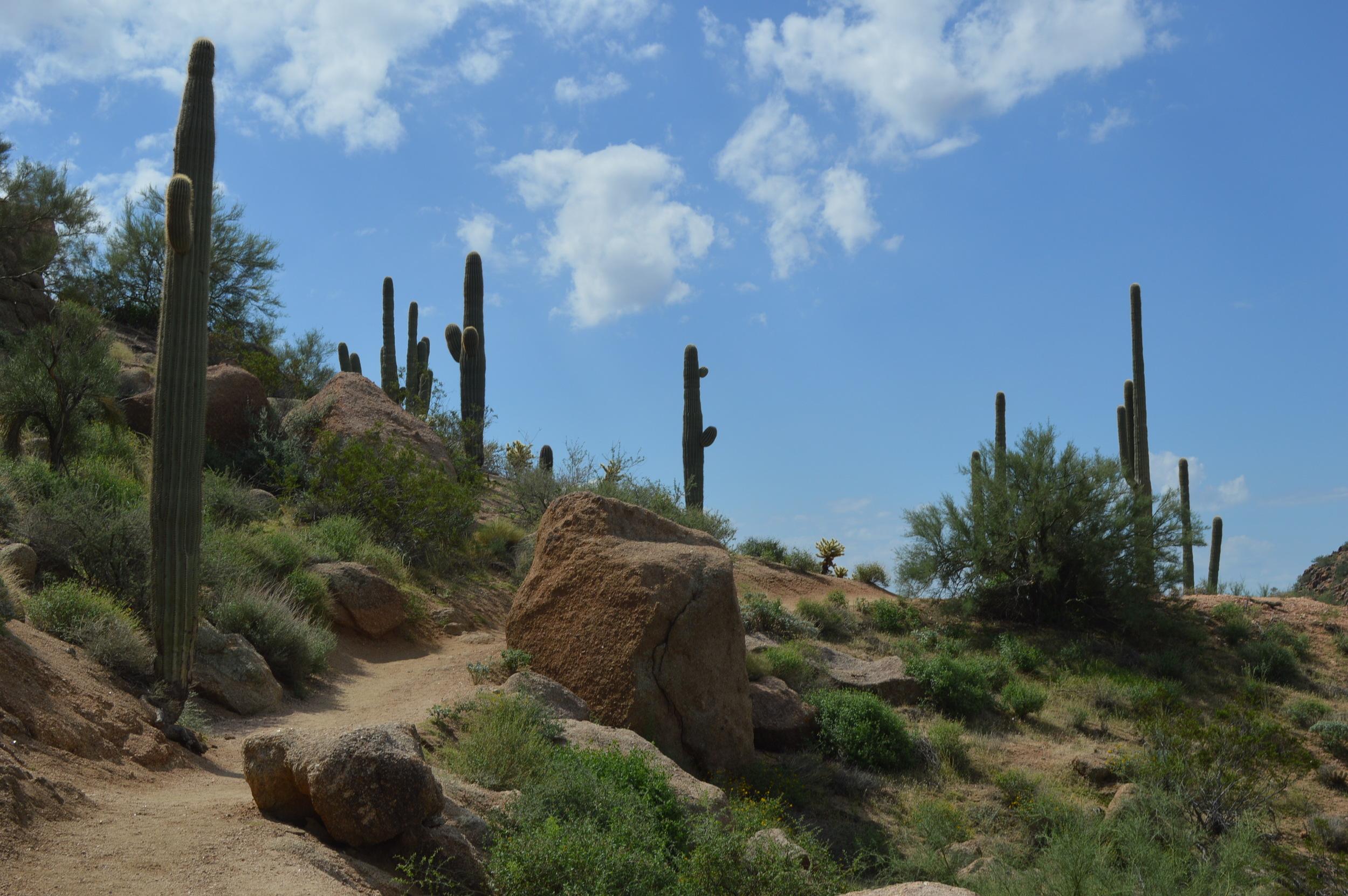 Pinnacle Peak Arizona