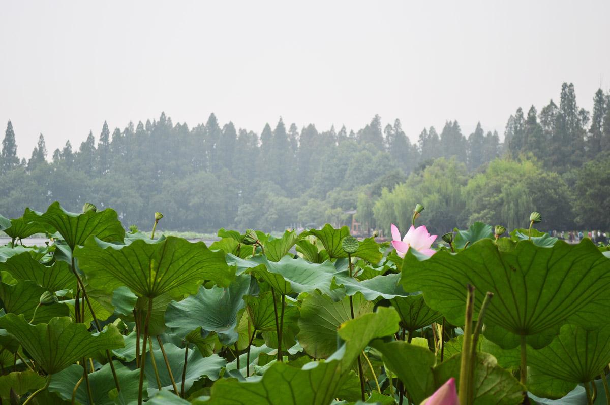 Hangzhou Flower