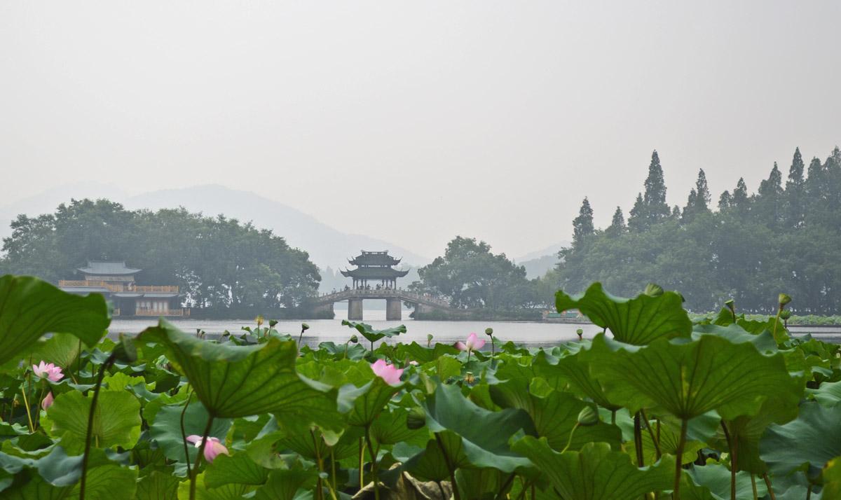 Hangzhou Lillies