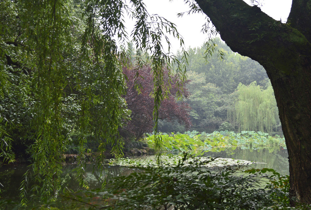 Hangzhou Tree Scenery