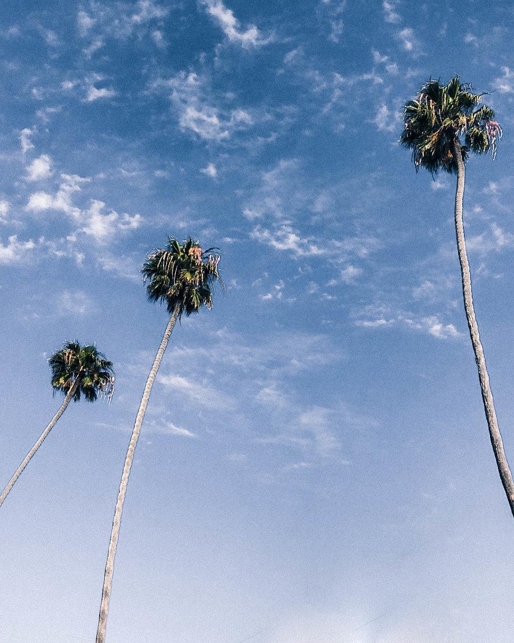 Love those California palms!