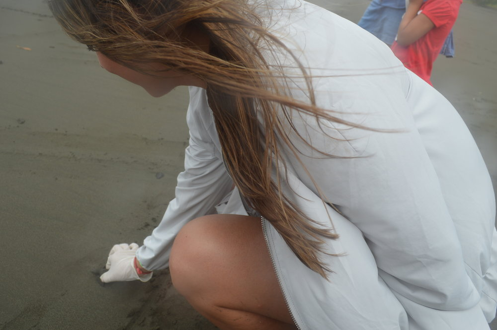 Releasing baby sea turtles into the ocean in Costa Rica - what an incredible experience! This article recaps the touching experience, what to expect, and how to choose an organization that safely and ethically cares for the turtles. Pura Vida :) | goseekexplore.com | Go Seek Explore travel blog | Travel Costa Rica