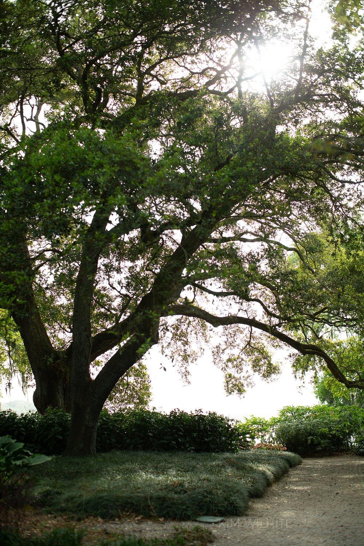 rip-van-winkle-gardens-engagement-photos-1.jpg