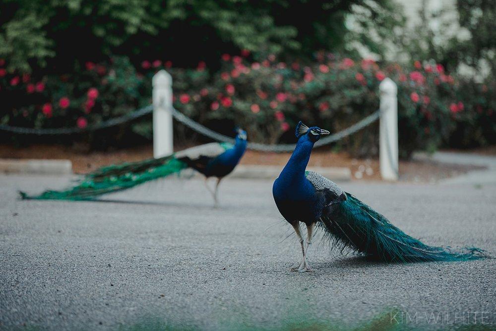rip-van-winkle-gardens-engagement-photos-101.jpg