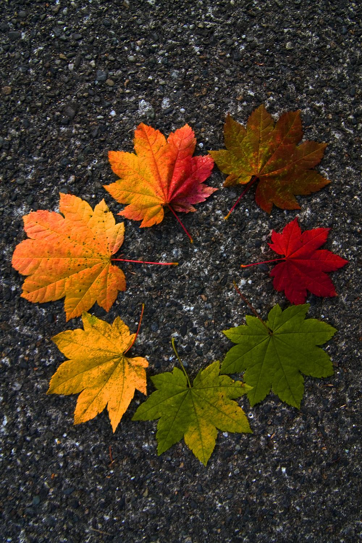Leaves-1.jpg