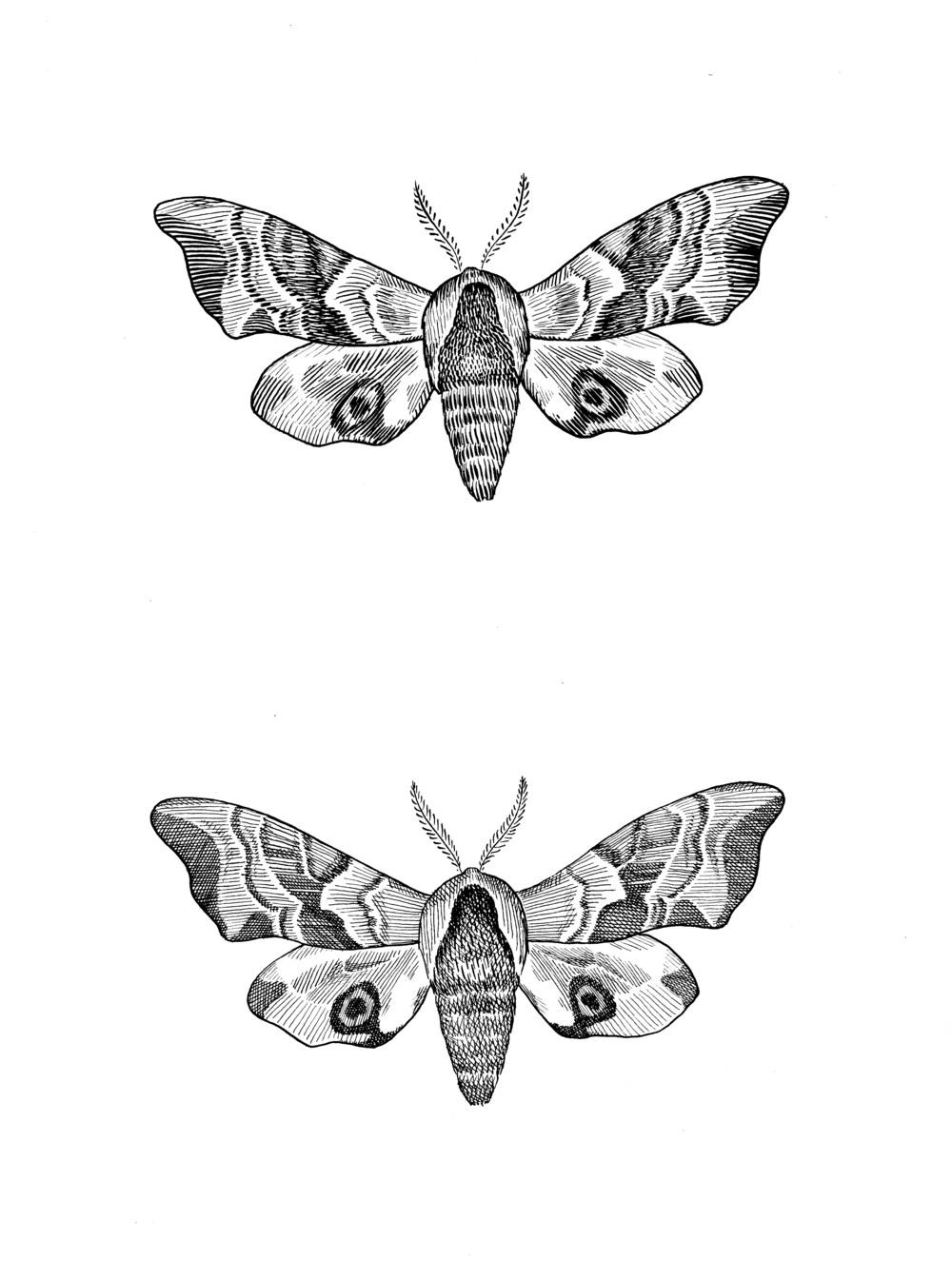 moths2 cropjpeg.jpg