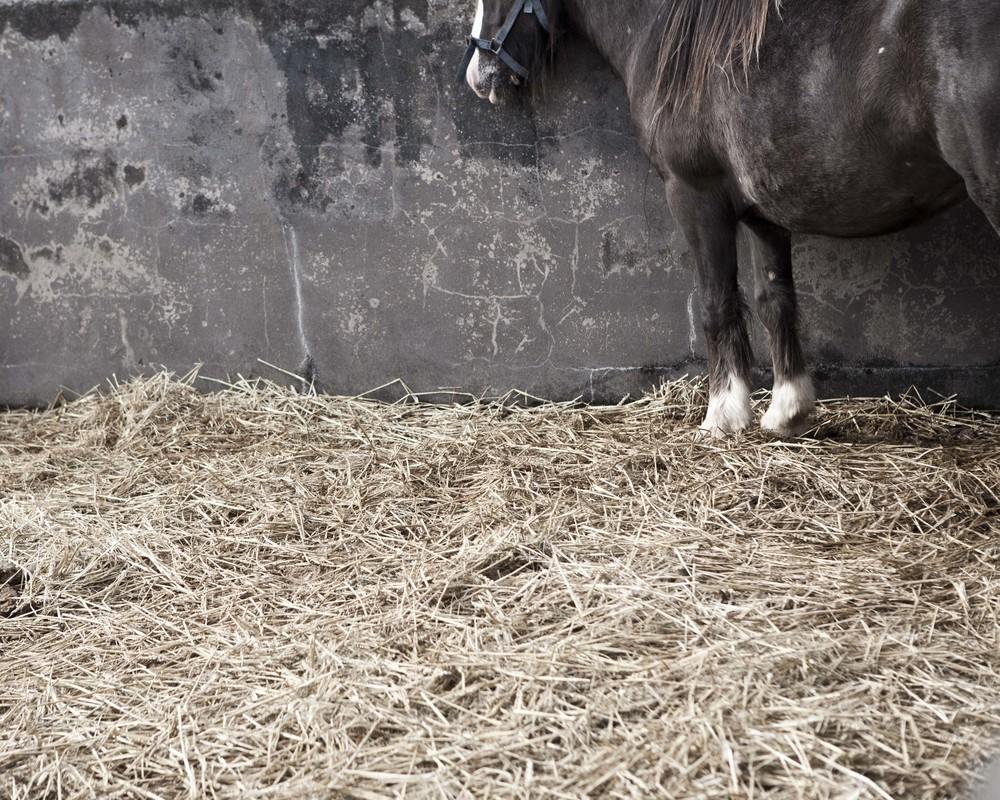 Horse_Identification_1.jpg