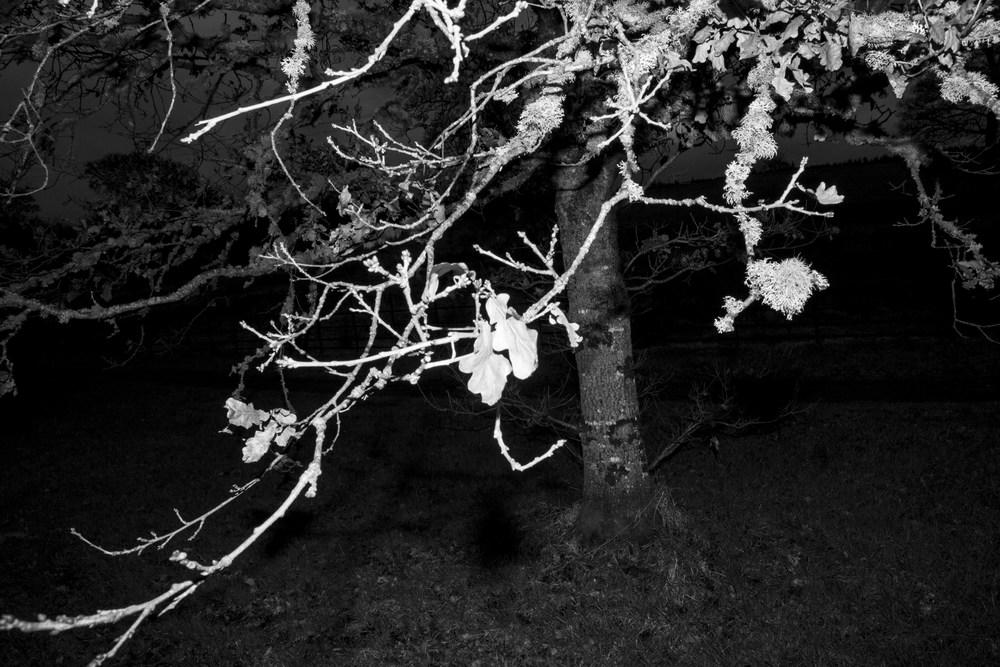 Tree_3.jpg
