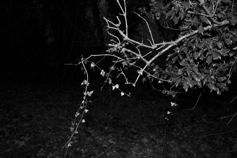 Tree_6.jpg