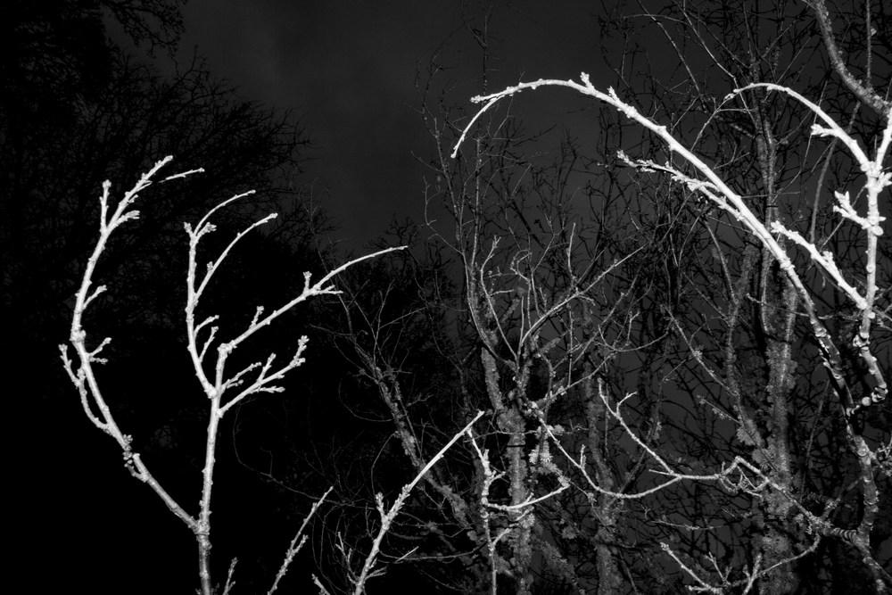 Tree_9.jpg