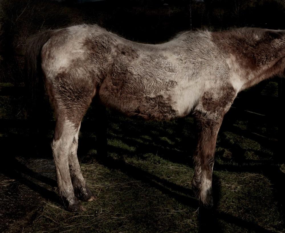 Horse_MFA_2012_20080126_0132 copy.jpg