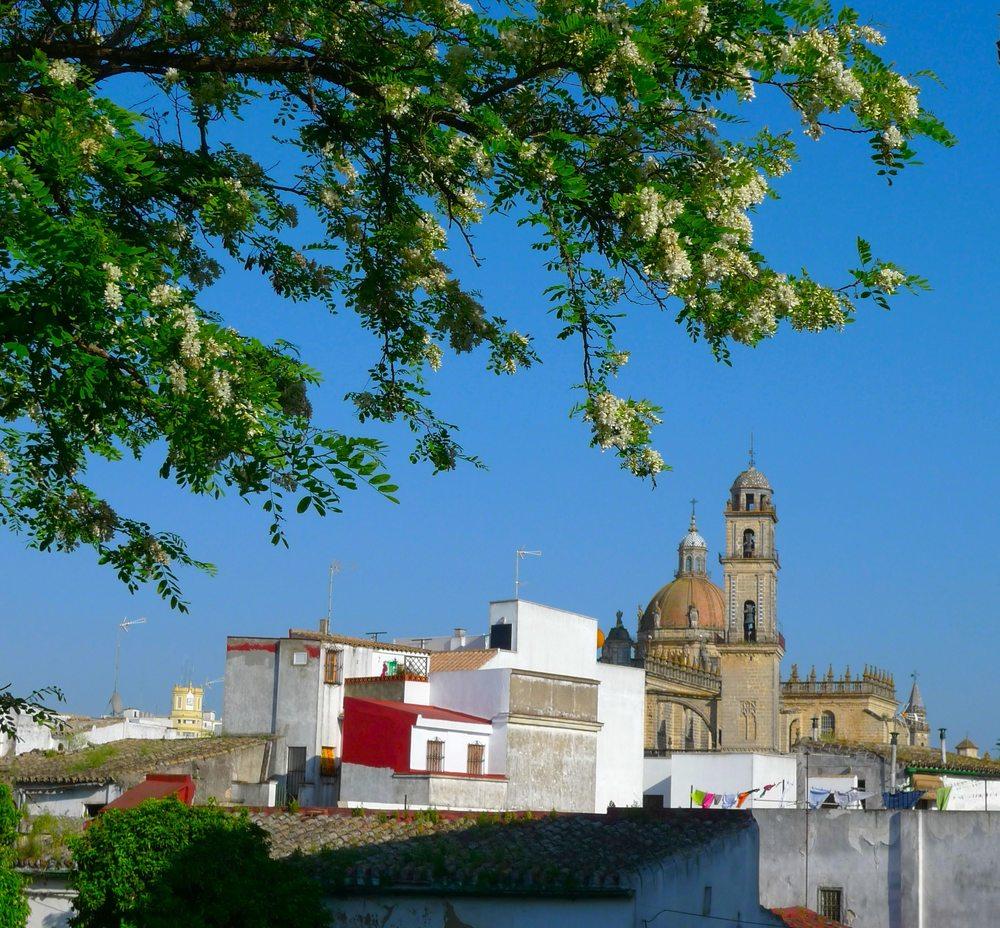 Jacaranda & Cathedral ©Diana Welch
