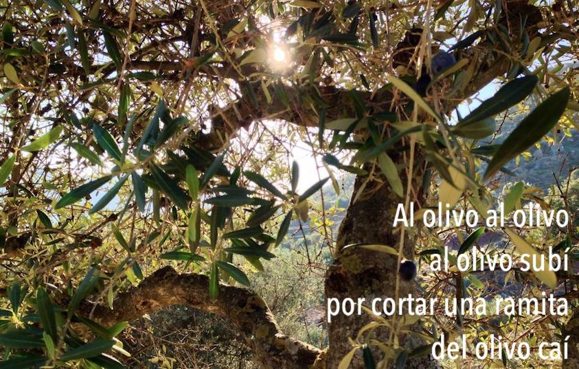 Al Olivo