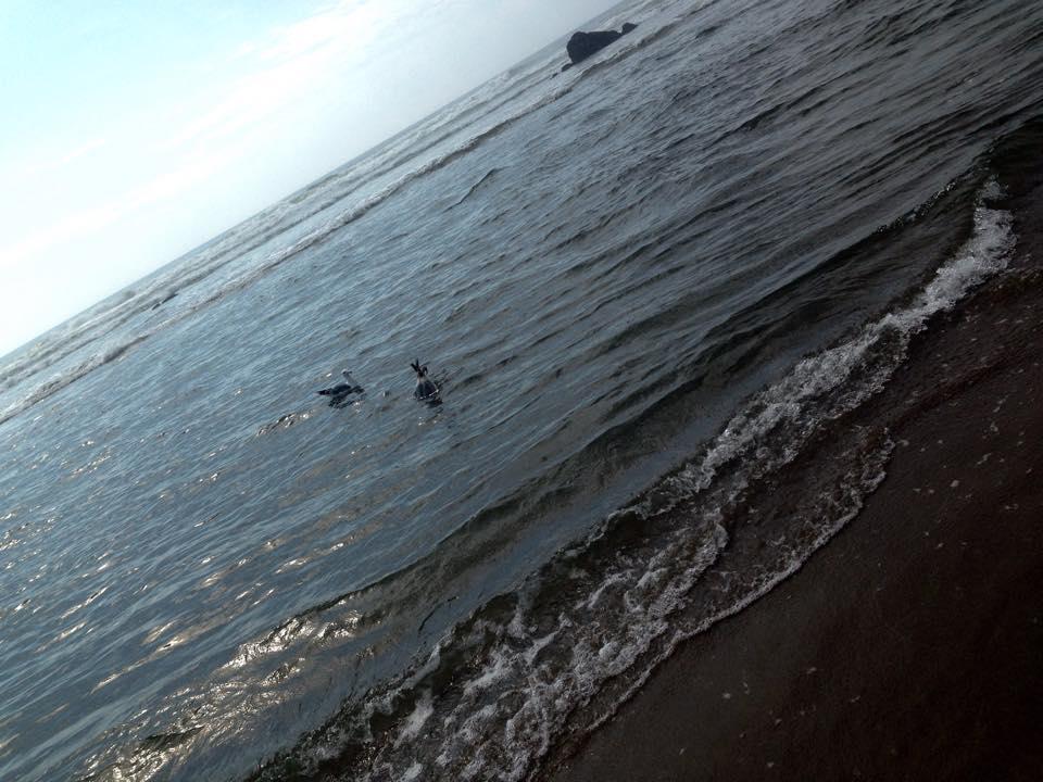 sea gulls.jpg