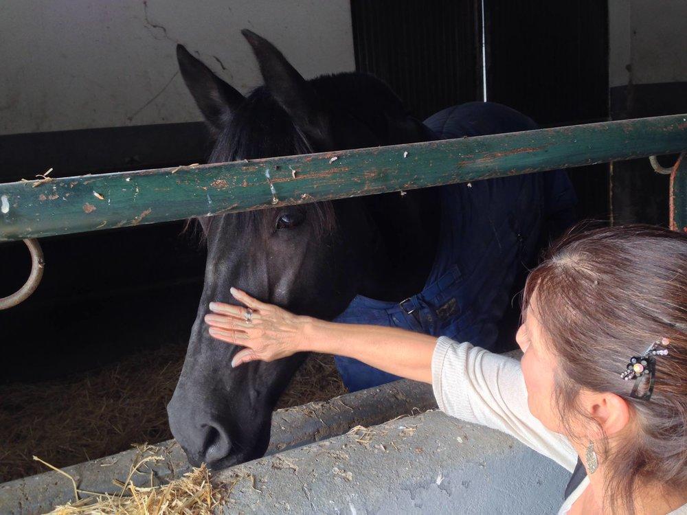Carol with horses Jerez.jpg