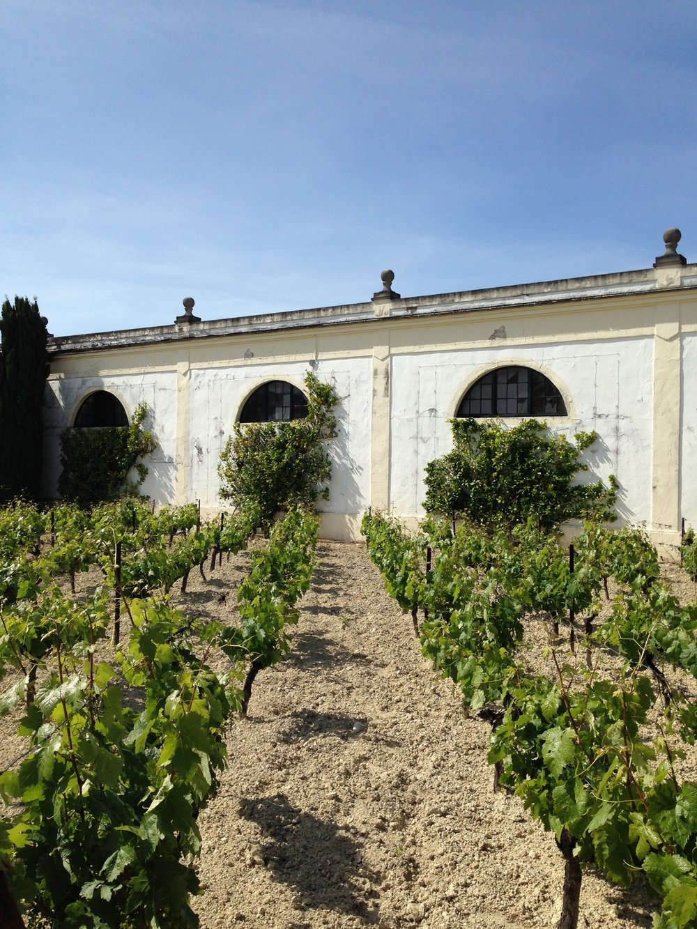 vineyards at gonzales byass.jpg