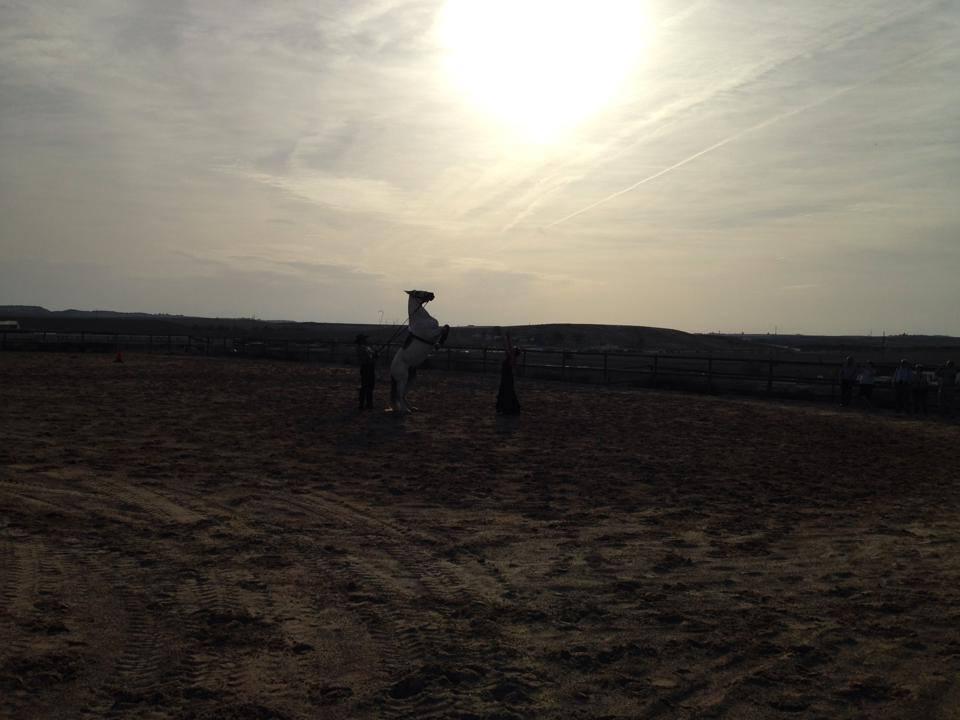 Caballo:Dancer in Jerez.jpg