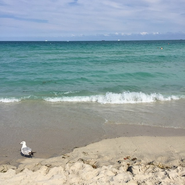 Hangin' on the beach between classes because Miami (at On The Beach in South Beach)