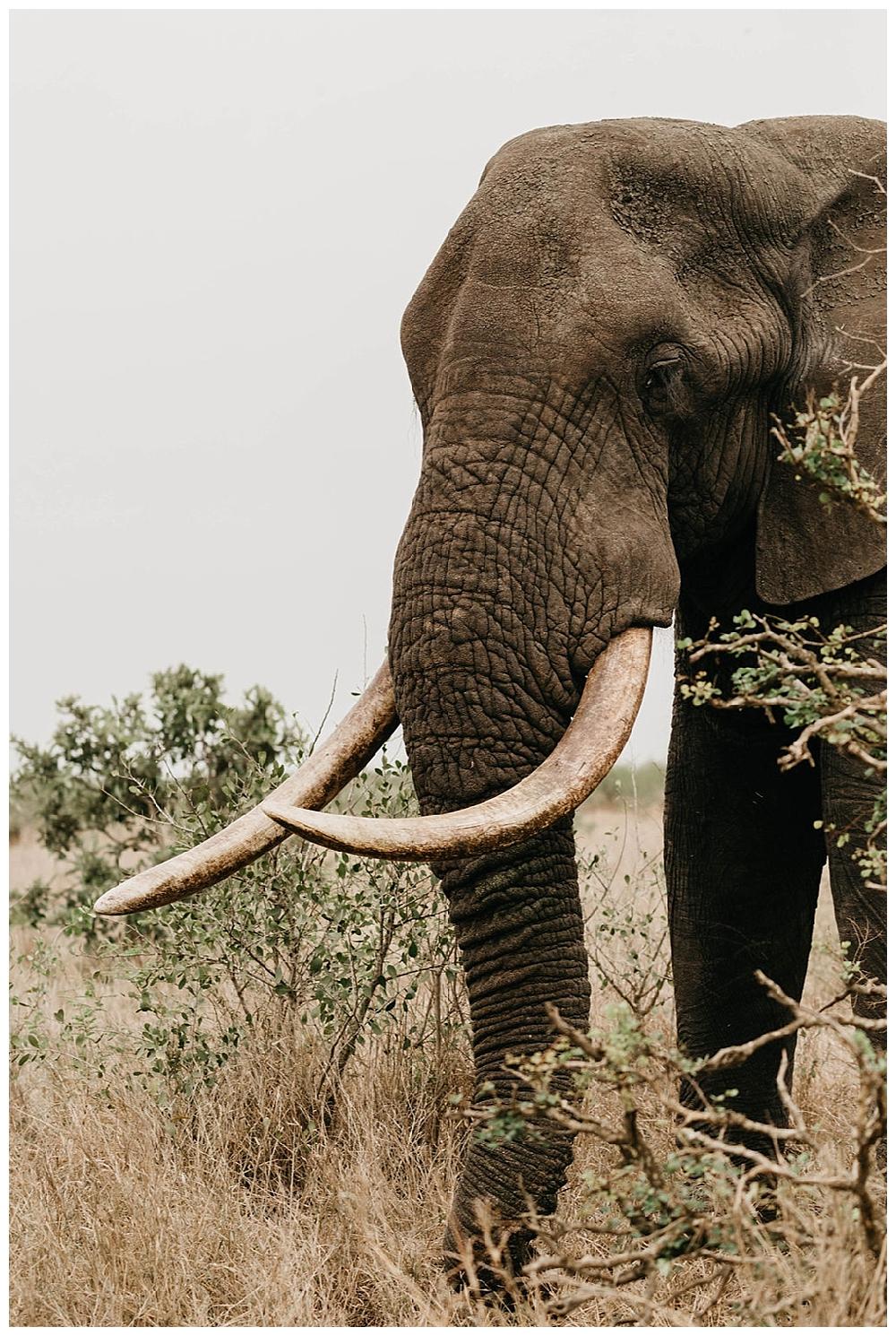 christinakarstphotography_southafricaelopement-104.jpg