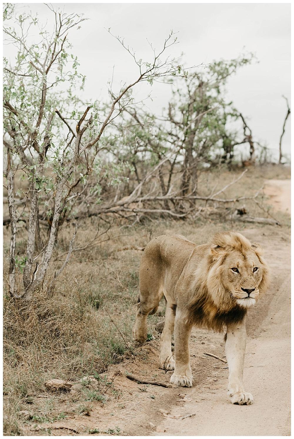 christinakarstphotography_southafricaelopement-544.jpg