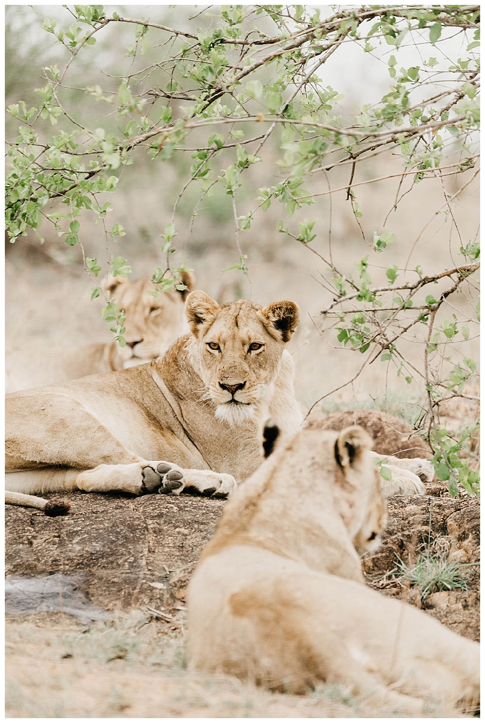 christinakarstphotography_southafricaelopement-550.jpg