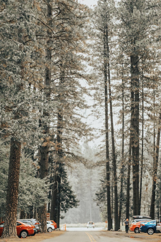 majestic-northern-california