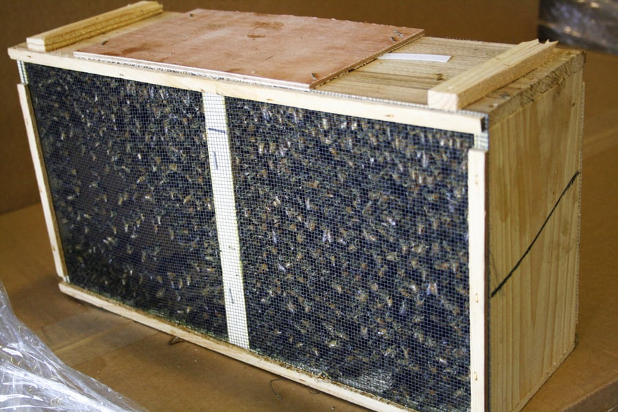 A package of bees from  bees-bees-bees.com .