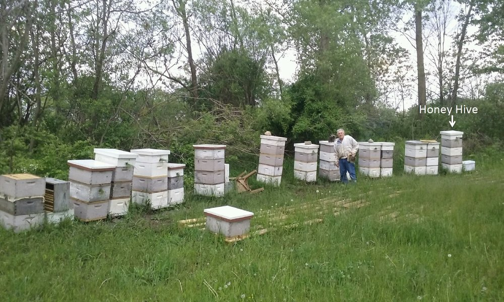 Mel with his spring starts stacked and separated by Snelgrove boards with each colony entrance facing a different direction