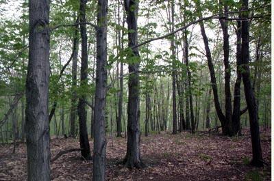 Landscape2(spring).jpg