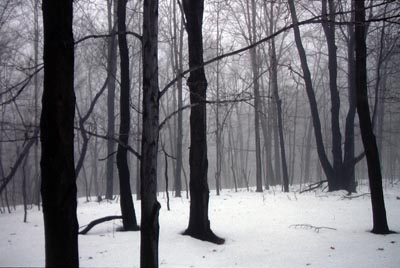 Landscape2,winter.jpg