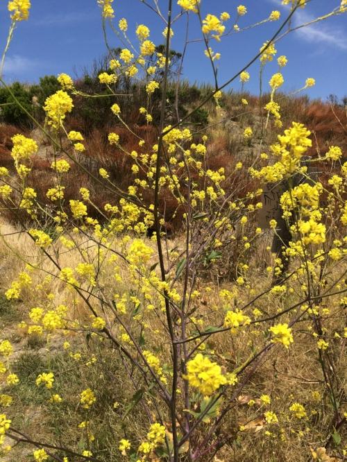 Estero Bluffs State Park - Cayucos, CA
