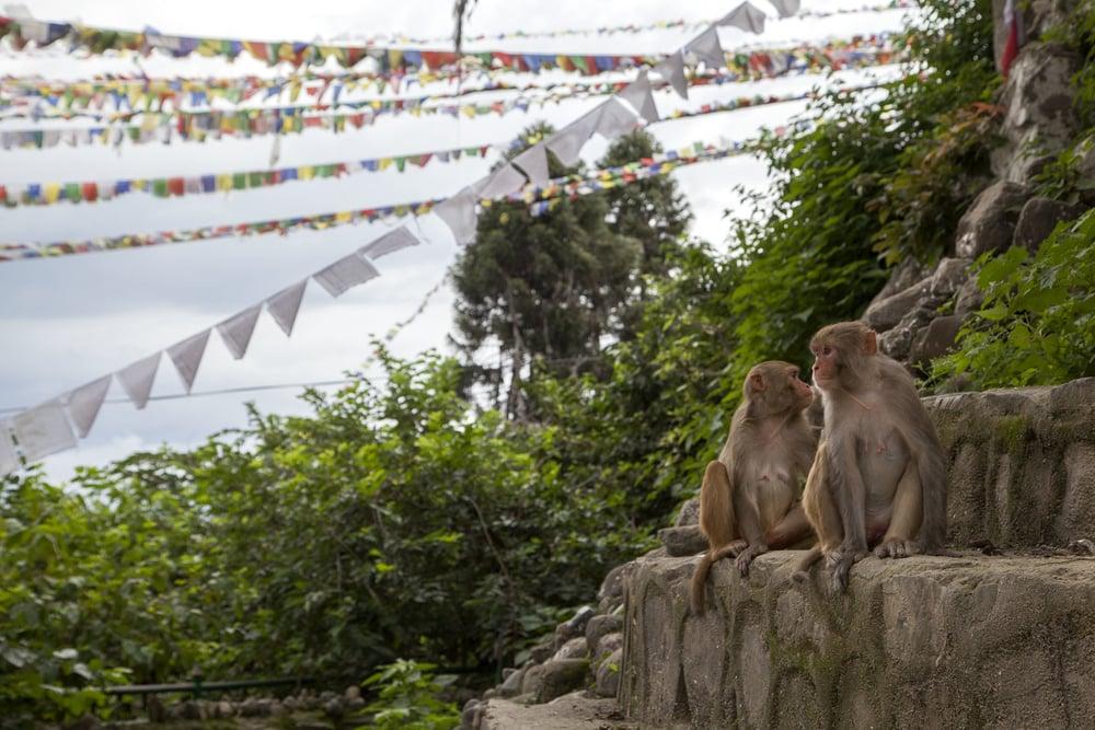 monkeytemple.jpg
