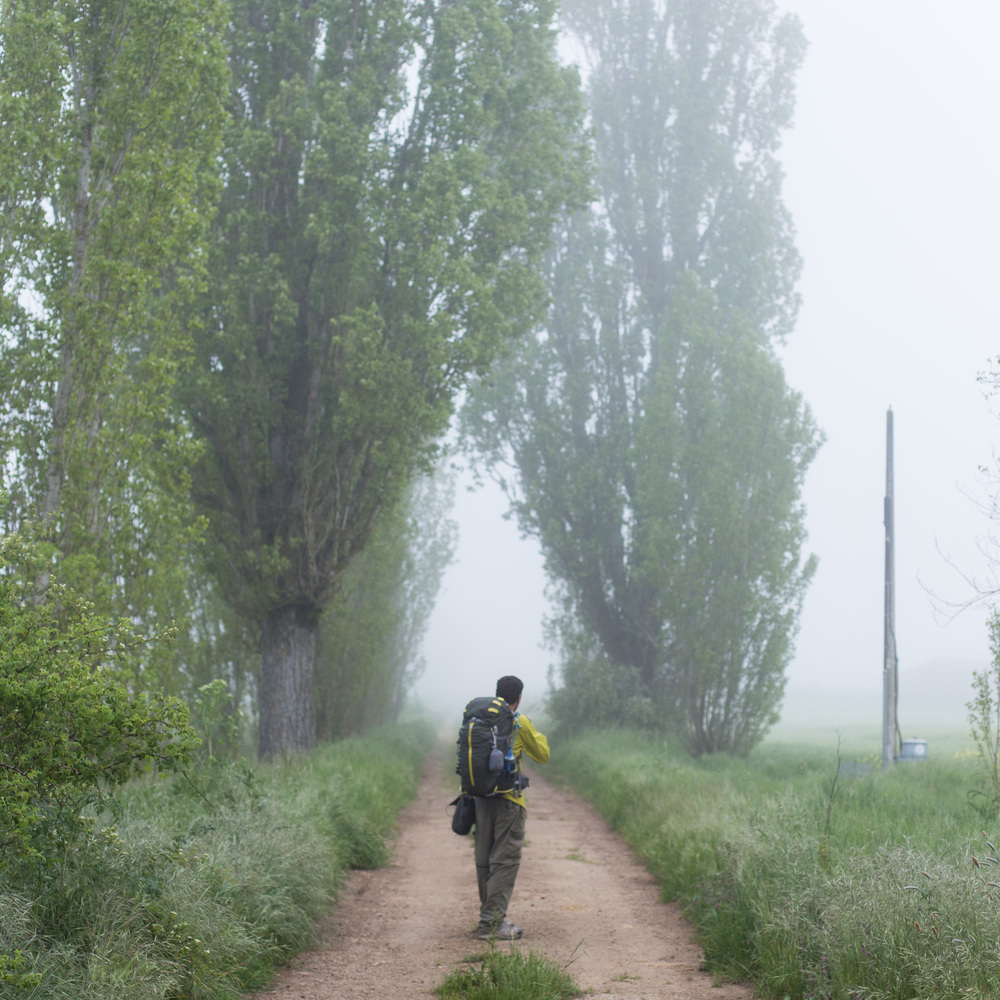 An eerie morning on the Camino.