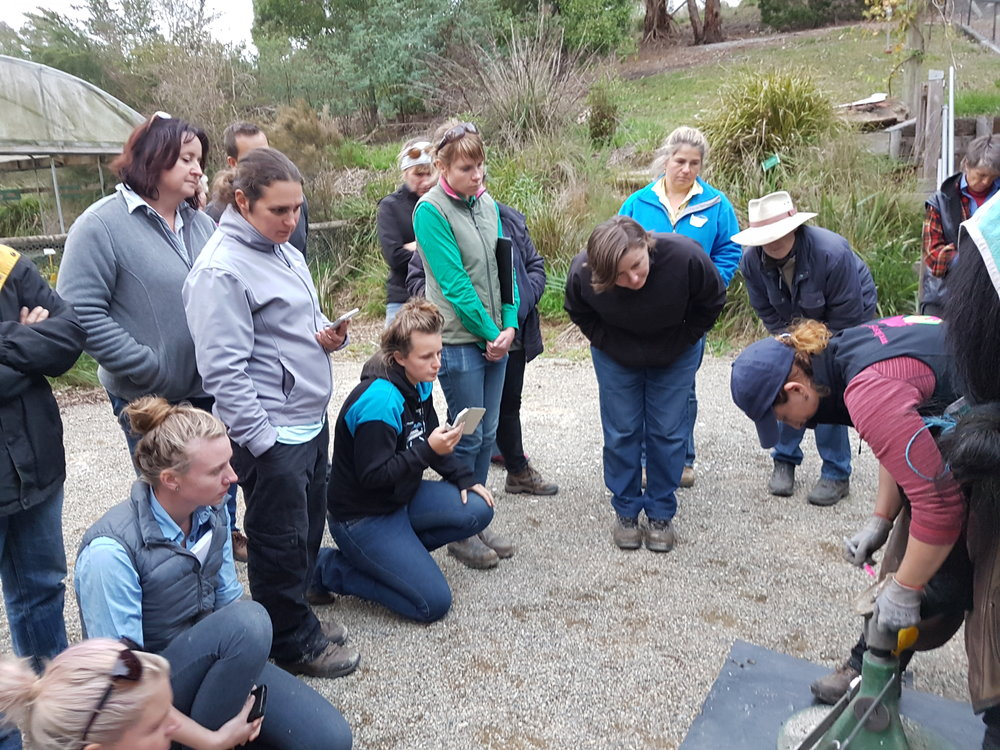 Daisy Bicking from Daisy Haven Farm School of Integrative Hoof Care, USA, teaching studentsto use polyurethane shoes at our May 2016 Australian class