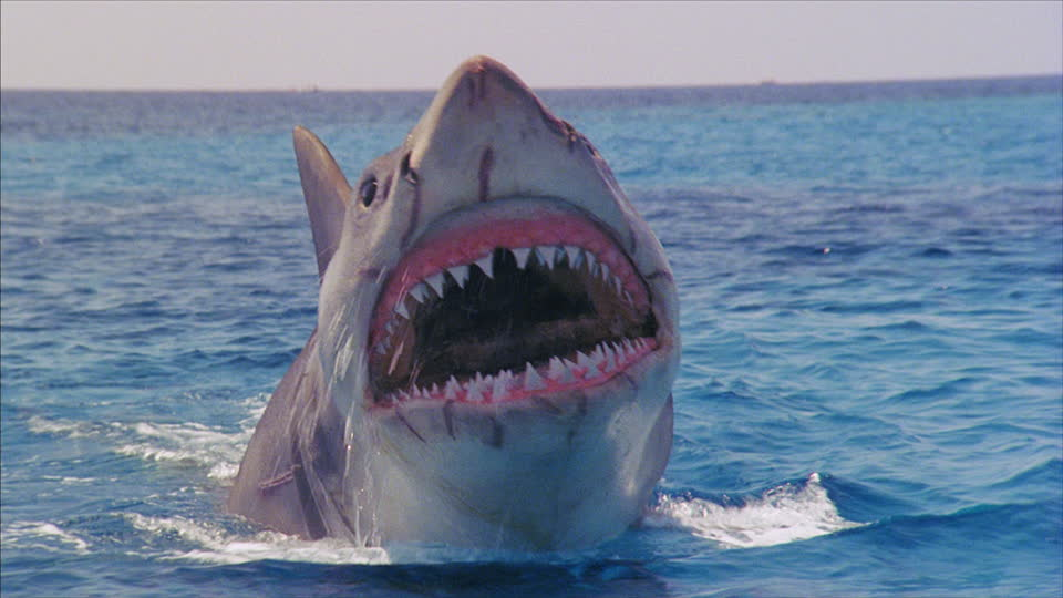 264649875-jaws-4-film-mouth-open-tooth-shark-fish.jpg