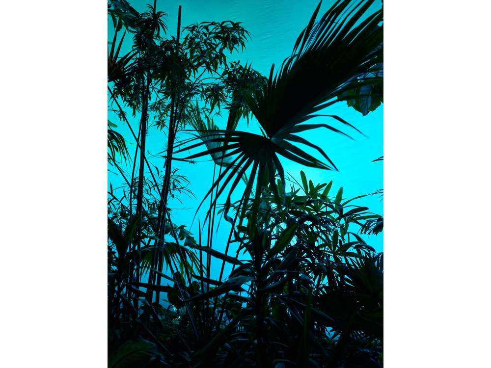 Tropic_Island_2015__©_Gataric-Fotografie__137.jpg