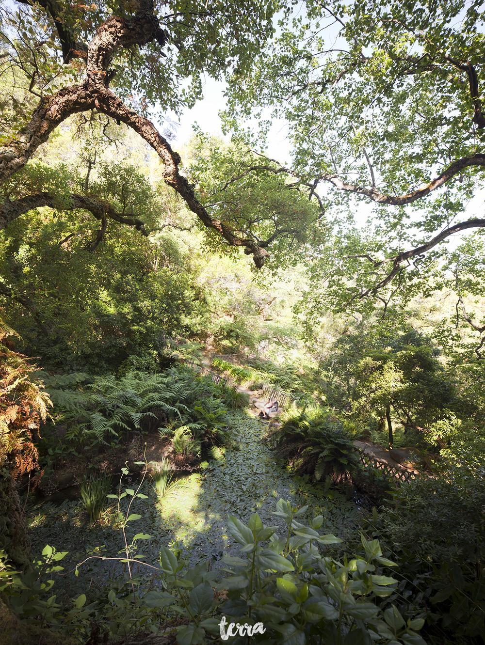 sessao-fotografica-parque-palacio-monserrate-sintra-terra-fotografia-0010.jpg