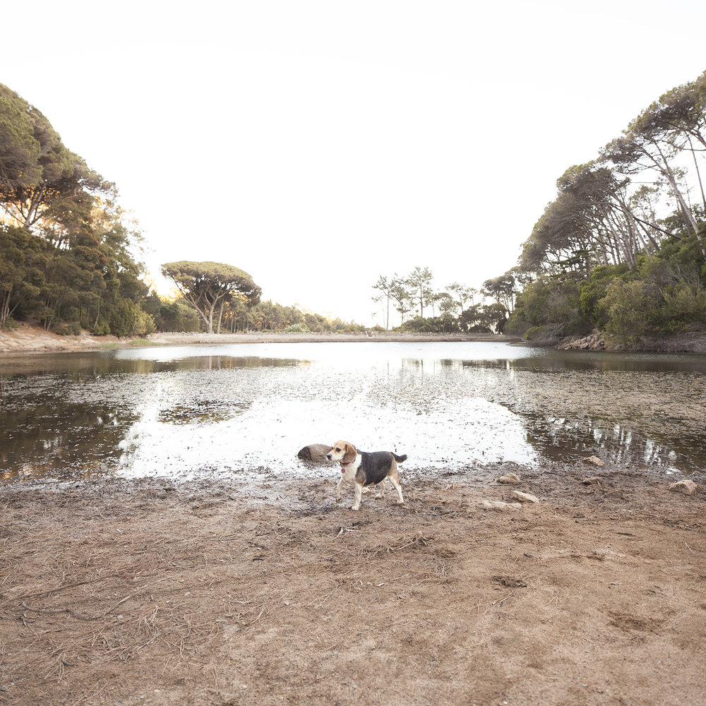 sessao-fotografica-familia-lagoa-azul-sintra-terra-fotografia-41.jpg