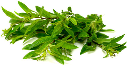lemon verbena.jpg